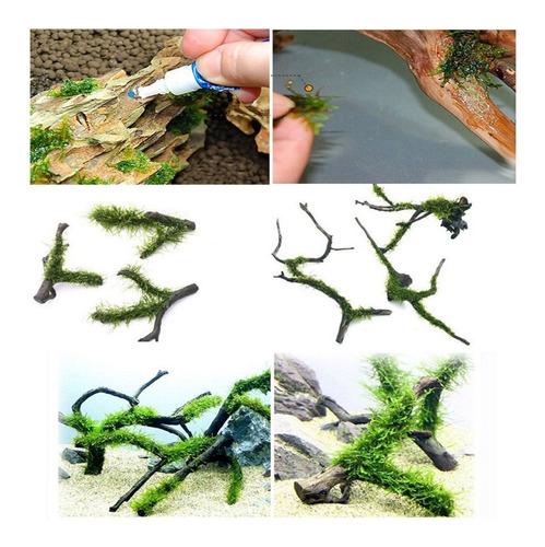 pegamento instantáneo plantas troncos aquascaping acuarios