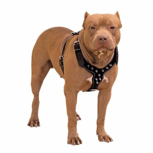 peitoral ajustável c/ cravo cães raça pit bull pitbull comac