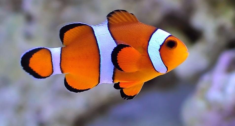 Venda peixes aquario marinho