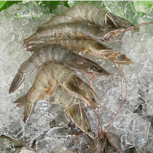 peixes e crustáceos