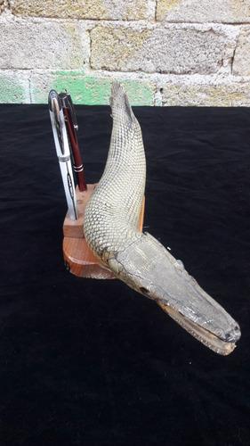 peje lagarto disecado 38cm