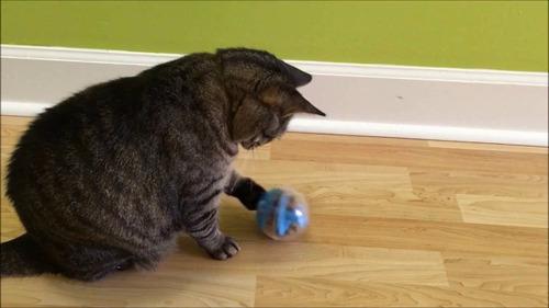 pelota - bola de premios catit juguete interactivo para gato