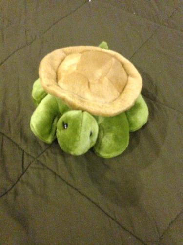 peluche tortuga galápagos