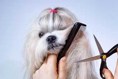 peluquera canina