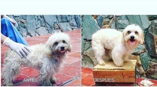 peluqueria canina a domicilio.