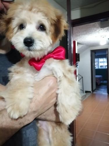 peluquería canina a domicilio