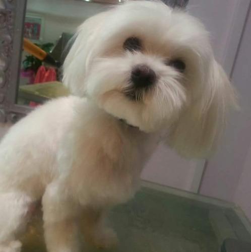 peluqueria canina a domicilio