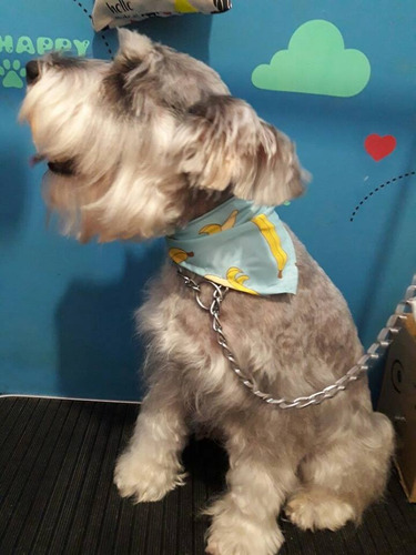 peluqueria canina a domicilio / baño y corte perros chicos