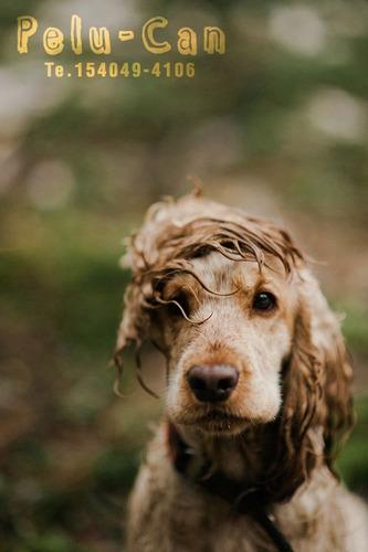 peluqueria canina a domicilio. baños. cortes de raza. uñas.