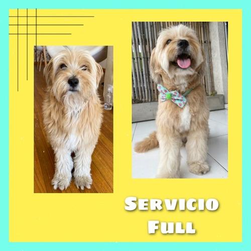peluquería canina a domicilio capital federal y zona norte
