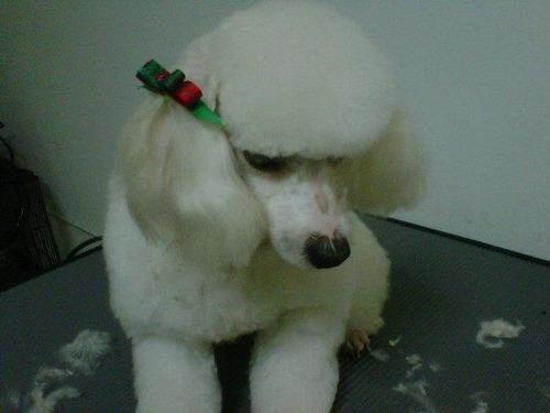 peluqueria canina a domicilio corte a todas las razas