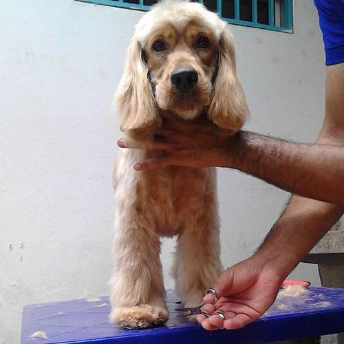 peluqueria canina a domicilio fashion puppies ca
