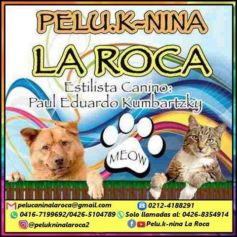 peluqueria canina a domicilio  grooming  estilista canino !!