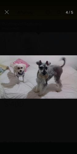peluquería canina a domicilio - moreno