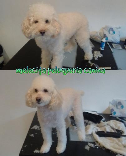 peluqueria canina a domicilio palermo y capital federal