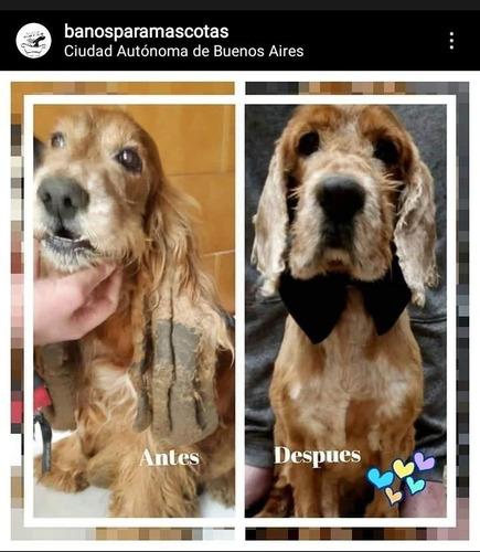 peluquería canina a domicilio  perros buenos aires verano