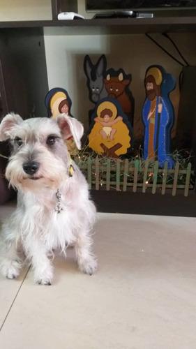 peluquería canina a domicilio¡ reserva tu cupo