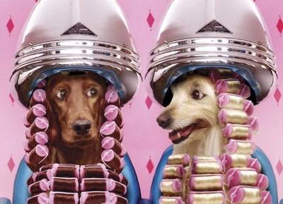 peluqueria canina a domicilio santiago