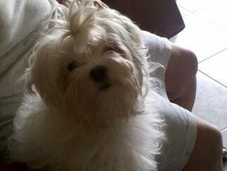 peluqueria canina a domicilio.baño y corte y corte de uñas.