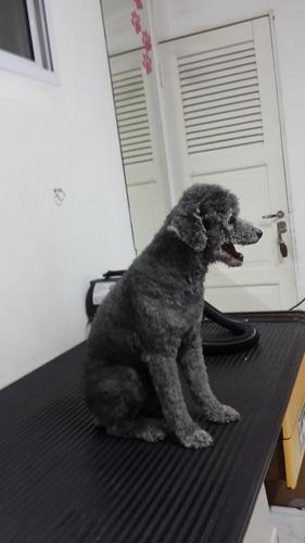 peluquería canina baño de perros