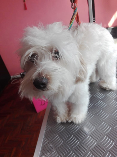 peluqueria canina baños & cortes , servicios a domicilio