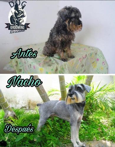 peluquería canina baños y cortes de cabello canino