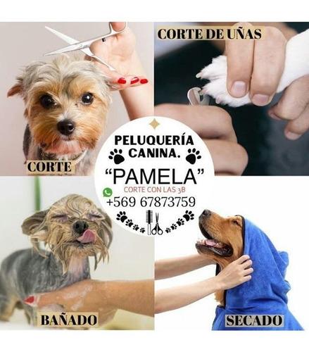 peluqueria canina  bonito como tú