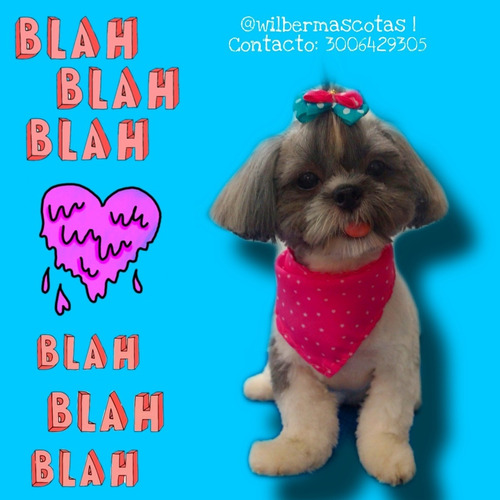 peluqueria canina //dog groomer//