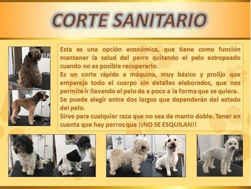 peluqueria canina en pocitos - no movil