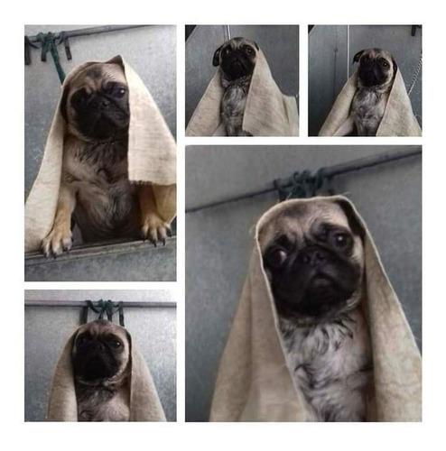 peluquería canina en quito, servicio puerta a puerta!!