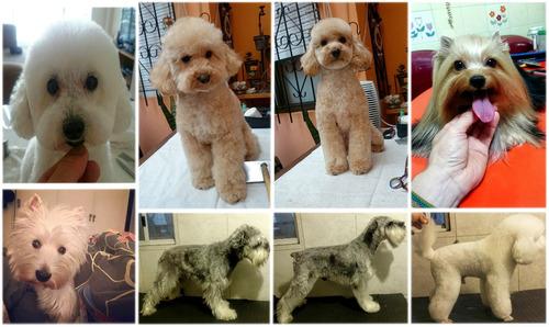 peluquería canina felina a domicilio porfa leer descripción