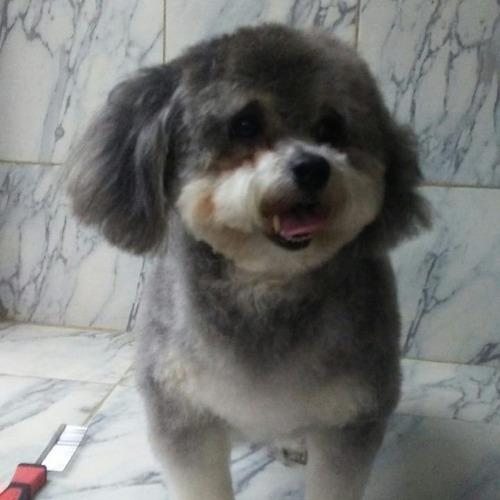 peluqueria canina grooming y veterinatia vip a domicilio