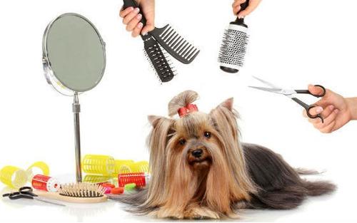 peluqueria canina hasta 12 kg