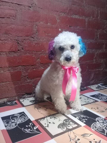 peluquería canina luli