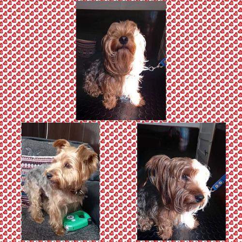 peluqueria canina luna - precio a convenir