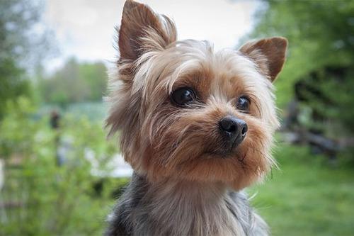 peluquería canina  luz  baños antibacteriales