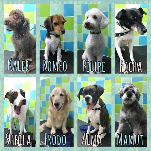 peluquería canina mascotas