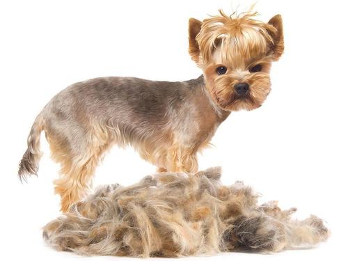 peluqueria canina ml dog center