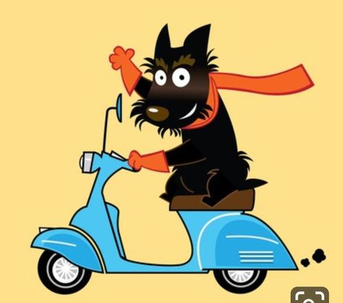 peluquería canina móvil