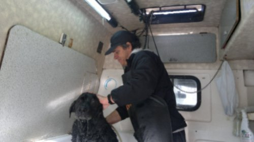 peluqueria canina movil  washcan, consultar precio por serv