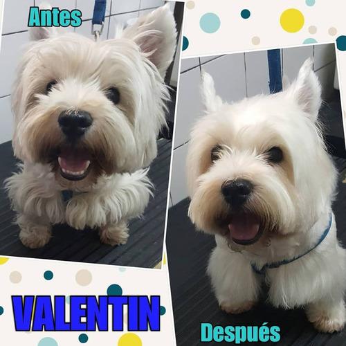 peluquería canina promo h/fin de mes-  siempre fiel (local)