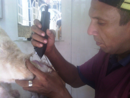 peluqueria canina y asistencia veterinaria a domicilio