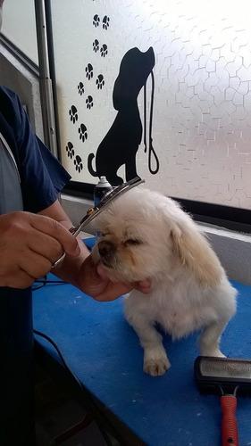 peluqueria canina y felina