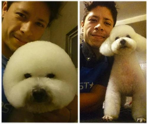 peluquería canina y felina domicilio paseos leer descripción