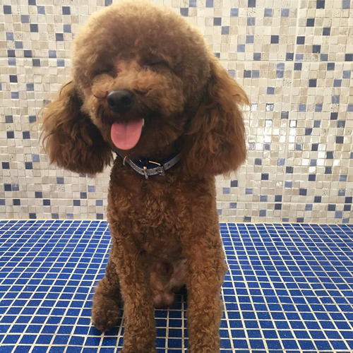 peluqueria canina y pet shop ponme guapo (bernal)