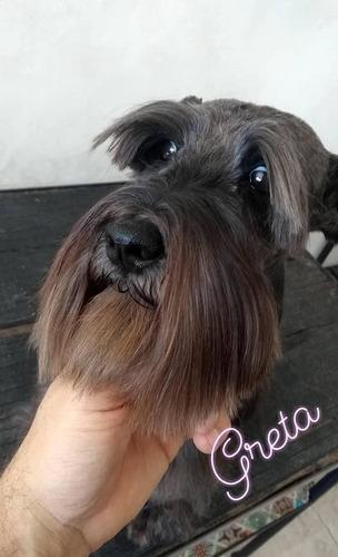peluquería canina zona oeste- haedo-luzuriaga-moron-ramos