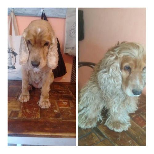 peluquero canino berazategui centro