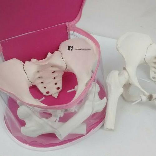 pelvis femenina didáctica
