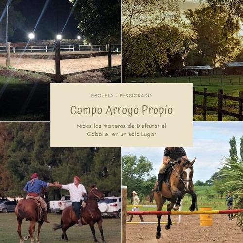 pension caballos box campo - escuela niños adultos -