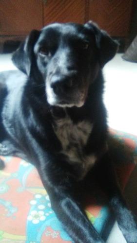 pensión canina, en casa de familia!